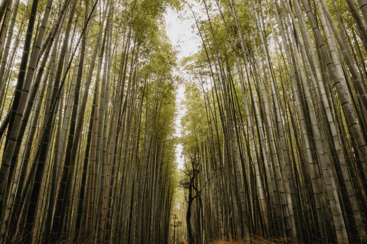 Was kostet eine Reise nach Japan?